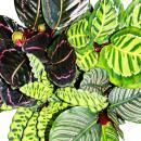Shadowplant  - Set of 4 different Plants - 14cm pot -...