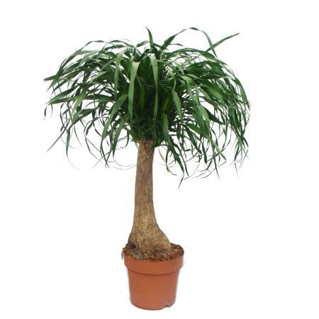 Rarit ten ausgefallene zimmerpflanzen for Ausgefallene zimmerpflanzen