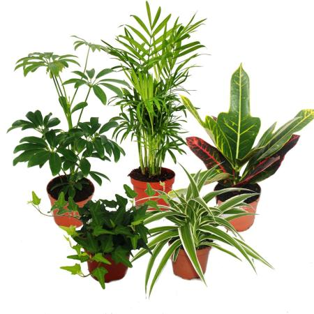 Raritäten-ausgefallene Zimmerpflanzen