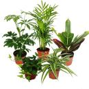 Large set of room plants with 5 plants - 9cm