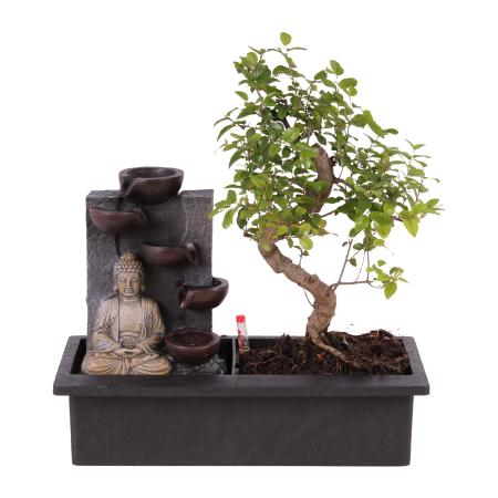 """Indoor bonsai with room fountain """"Buddha with 4 bowls"""" - illuminated - Easy Care System"""