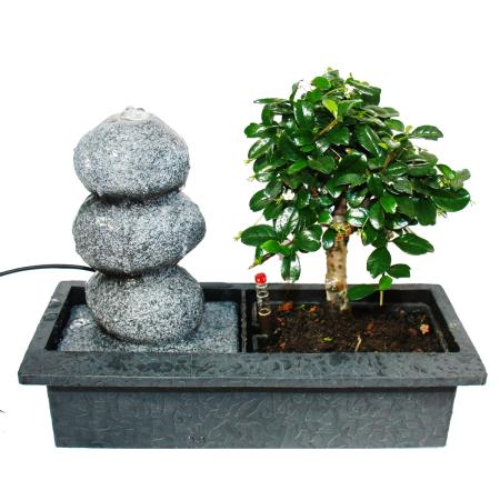 """Indoor bonsai with Room Fountain """"Balance"""" - 3 pebbles - Easy Care System"""