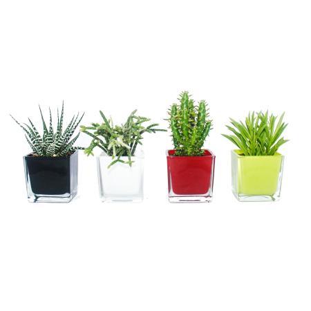 Übertopf Glas-Würfel - verschiedene Farben 8x8x8cm