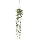 Flowering plant - Ceropegia woodii - Chandelier - 10cm Pot