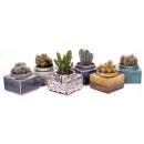 "Square planter ""Maracaibo"" for 8,5cm and 9cm..."