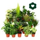 Exotic heart - easy-care indoor plants and green plants -...