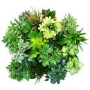 Exotic heart - easy-care indoor plants and green plants - air-purifying in 12-14cm pot