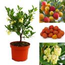 Exotic heart - strawberry tree - Arbutus unedo -...