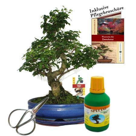 Bonsai - Chin. Liguster - Ligustrum - ca. 10 Jahre - 25cm Schale - Geschenk-Set mit Schere und Dünger
