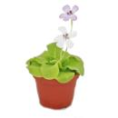 Butterwort - Pinguicula - 9cm pot