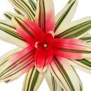 """Nestananas - Neoregelia """"Van Durme"""" - Bromelie in wunderbaren Farben - 12cm Topf - weiß-grün mit roter Mitte"""