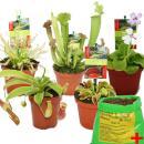 Starter Set Fleischfressende Pflanzen - 5 Pflanzen + Erde...