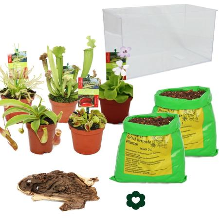 Carnivorous Plants - Aquarium for planting at home - large