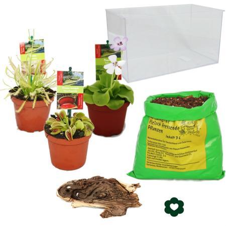 Carnivorous Plants - Aquarium for planting at home - medium