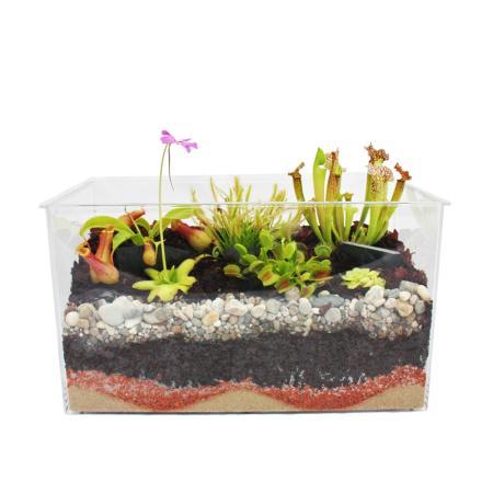 fleischfressende pflanzen aquarium zum selberpflanzen. Black Bedroom Furniture Sets. Home Design Ideas
