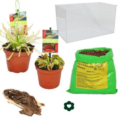 Carnivorous Plants - Aquarium for planting at home - small
