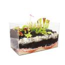 Carnivorous Plants - Aquarium for planting at home - small