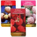 """Ausgefallene Erdbeer-Sorten - 3 Pflanzen - Weisse Erdbeere""""Snow White"""" - Ananas-Erdbeere - Himbeer-Erdbeere"""